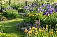 Perennial planting with Iris sibirica and Hemerocallis -  daylilies. A grass path separates the perennials from the vegetable patch