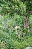 Acanthus and Echinops ritro next to tree
