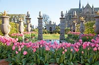 Tulipa 'Pink Impression' in containers alongside pool and Italianate water fountains in The Collector Earl's Garden at Arundel Castle, Sussex in spring. Head Gardener: Martin Duncan