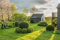 View of garden in late afternoon sunshine. Yew and Box topiary, combined greenhouse and shed, birch and wild cherry trees. April.