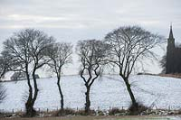 Line of Ulmus glabra - Wych elm trees with snow covered fields near Rosskeen Free Church, Easter Ross, Scotland, January.