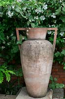 Rosa 'Cooper's Burmese' and Vitis 'Brandt' on wall behind large terracotta urn