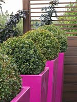Large pink planters provide interest and a barrier.
