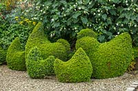Clipped Buxus topiary hens and chickens - Bourton House Garden, Gloucestershire