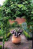 Petunias in terracotta pot under pergola with vine at Titsey Place Surrey