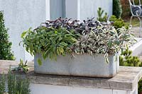 Zinc box planted with different varieties of sage: