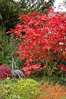 Acer japonicum 'Aconitifolium' ( Eisenhutblättriger Japan - maple ) in autumn color, metal - cranes as decoration