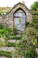 Erigeron karvinskianus ( Fleabane ) in natural planing edging path, and rustic wooden gate in garden