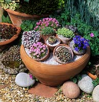 potted alpines in circular terra cotta container