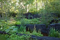 The M and G Garden 2019, view of the woodland inspired garden where the planting includes Rodgersias, ferns, Equisetum hyemale, Iris chrysographes and where burnt oak sculptures represent rock formations - Designer: Andy Sturgeon - Sponsor: M and G investments