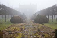 The Thyme Walk in the mist, with Golden Yew Topiary, Highgrove Garden in February, 2019.