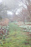 Galanthus - Snowdrops flowering under trees and shrubs in The Arboretum, Highgrove, February, 2019.
