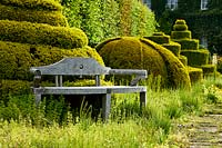 Wooden bench sits by clipped topiary forms in The Thyme Walk with Golden Yew Topiary, Highgrove, June, 2019.