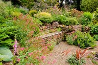 Stone retaining wall with bench surrounded by self-seeding Erigeron karvinskianus