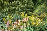 Ferns and other garden plants grow in border at Newby Hall and Gardens, Yorkshire.
