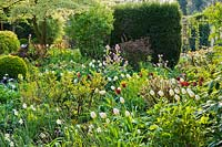 Spring flowerbed with Euphorbia x martinii 'Ascot Rainbow', daffodils, honesty - Lunaria annua, Tulip 'Jan Reus' and Tulipa 'White Emperor