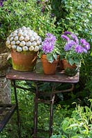 Potted Asters and snail houses arranged in clay pots.