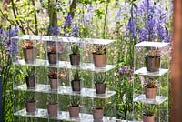 Perspex boxes displaying succulents in pots from the 'At Home - Grow, Dine and Relax' garden, RHS Malvern Spring Festival, 2018.