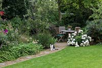 Pet cat sitting on path in town garden comprising lawn, flower beds and seating area near Hydrangea