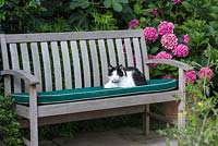 Pet cat resting on cushion on garden bench