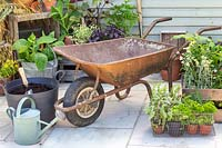 Materials and tools required to construct a wheelbarrow herb planter.