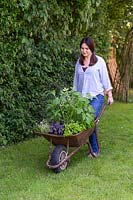 Woman pushes wheelbarrow planted with mixed herbs into position.