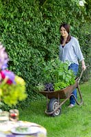 Woman pushes wheelbarrow planted with mixed herbs towards a table on a lawn.