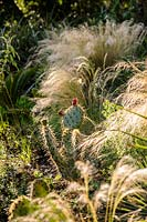 Opuntia and grasses on the Mediterranean bank. Abbotsbury Subtropical Garden, Dorset, UK.