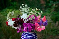 Sweet peas Lathyrus odoratus in a vase with Ammi major 'Graceand' and 