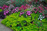 Summer flowering border including New Guinea Impatiens and Ornamental Sweet Potato vine Ipomoea Sweet Heart 'Light Green'.