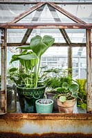 Vintage metal greenhouse containing a display of potted houseplants