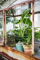 Vintage metal greenhouse with display of potted houseplants