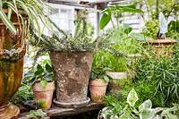 Group of assorted houseplants in rustic pots