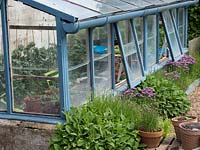 View along outside of painted greenhouse showing adjacent herb bed with sage, lavender and chives