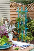 Trellis tin can planter planted with herbs and used at the edge of patio for easy access