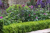 The Claims Guys: A Very English Garden - A cottage garden border with Aquilegia 'Blue Barlow', Cirsium rivulare, Rosa 'Capitaine John Ingram', Rosa 'Cardinal de Richelieu' and Rosa 'De Rescht', edged with box. Sponsor: The Claims Guys