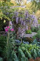 Wisteria sinensis with Chard, Leeks, Cabbages, Kale and Sweet Peas - Welcome to Yorkshire Garden - Sponsor: Welcome to Yorkshire - RHS Chelsea Flower Show 2018