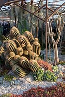 Looking into the Pearlfisher Garden - an underwater garden surrounded by Crassula arborescens, Sedum hispanicum, Echeveria var., Tillandsia useneoides and Cacti - Sponsors: Pearlfisher, Nigel Colclought and Jason de Caires Taylor - RHS Chelsea Flower Show 2018