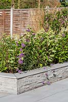 Modern raised bed with Hydrangea, Verbena and Grasses