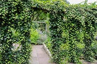 An ivy clad trellis forms a divide between different areas of the garden.