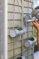 Woman watering hanging containers of newly planted Erigeron 'Profusion' seedlings.
