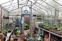 View within working greenhouse, Watcombe, Somerset, UK.