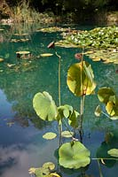 Lotus with seed heads. HUALU Hermitage on the Loire. Pres du Goualoup.  Festival des Jardins 2018, Chaumont sur Loire, France