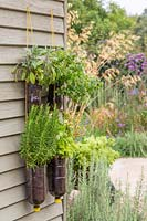 Tiered plastic bottle herb planter on shed - herbs include Rosemary, Feverfew, Sage and Marjoram