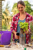 Woman planting Tanacetum - Feverfew to plastic bottle