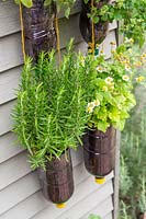 Tiered plastic bottle herb planter on shed - herbs include Rosemary, Feverfew, 