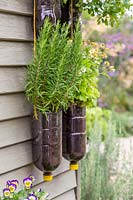 Tiered plastic bottle herb planter with Rosemary.