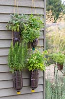 Tiered plastic bottle herb planters with Rosemary, Feverfew, Sage and Marjoram
