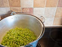 Metal jam pan full of harvested green grapes on stove.