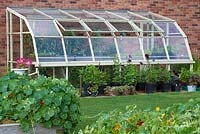 View of greenhouse with tomatoes and Dahlias in pots along the outside.